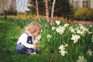 Child smelling daffodils